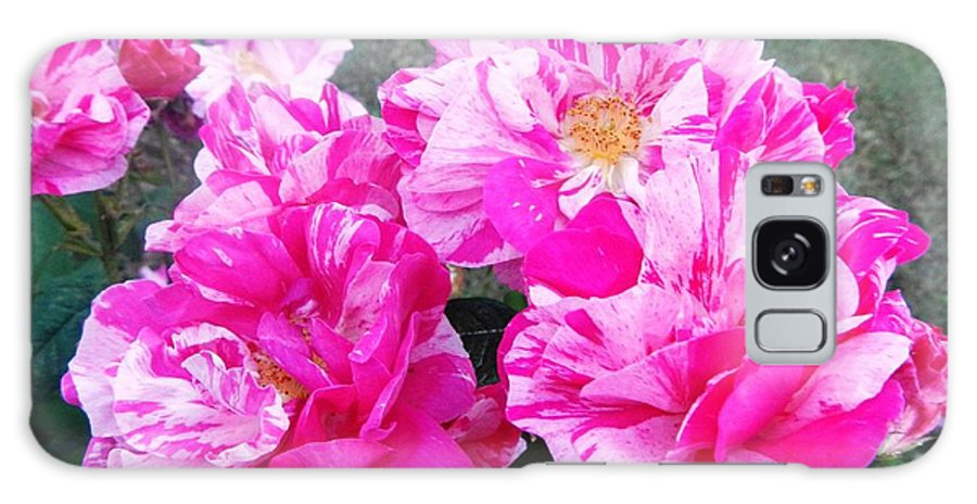 Floral.flowers Galaxy S8 Case featuring the photograph In Strips by Loreta Mickiene