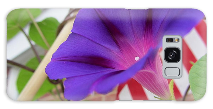 Flower Galaxy S8 Case featuring the photograph In The Morning - Summertime by Susan Carella