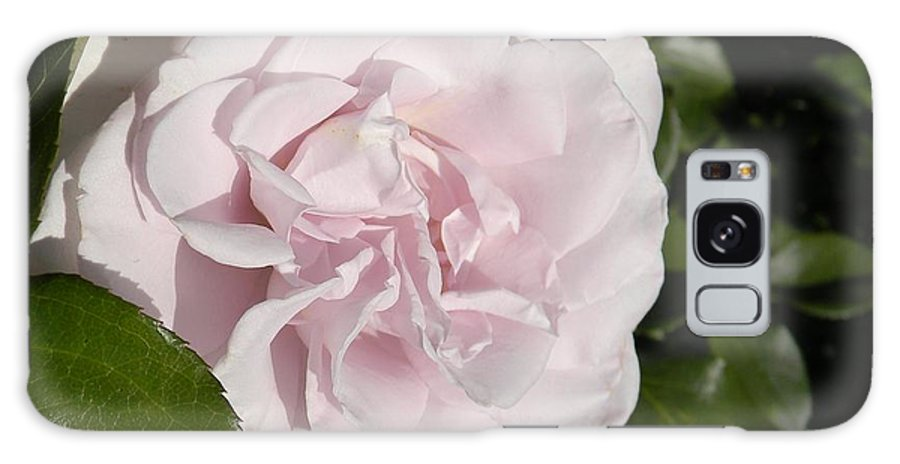Roses Galaxy S8 Case featuring the photograph In The Rose Garden by Nicole Crabtree