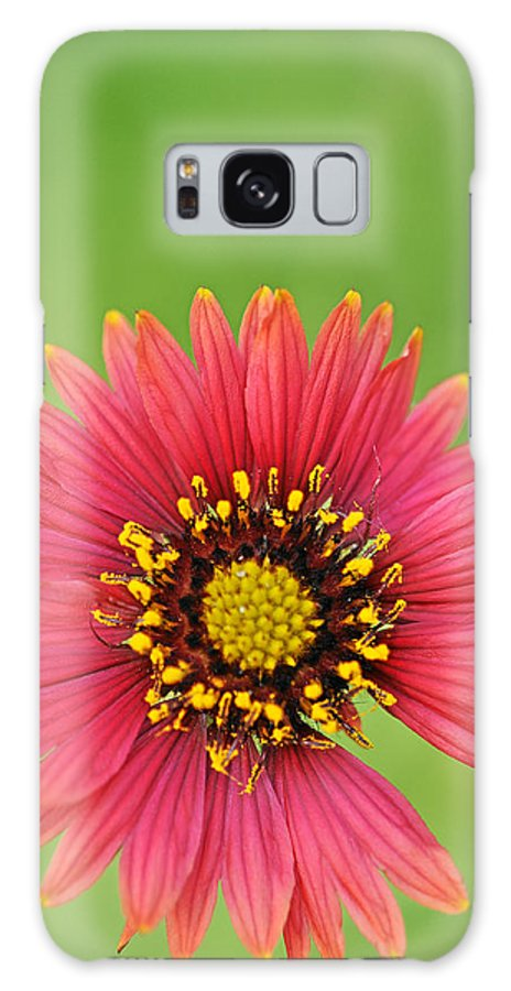 Wildflower Galaxy Case featuring the photograph Indian Blanket by Keith Gondron