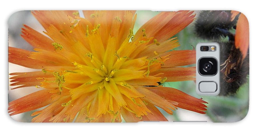 Flower Galaxy S8 Case featuring the photograph Indian Paintbrush by Tiffany Erdman