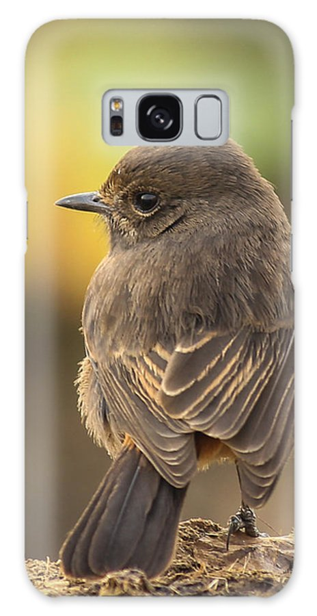 Indian Robin Galaxy S8 Case featuring the photograph Indian Robin Female by Vijay Sonar