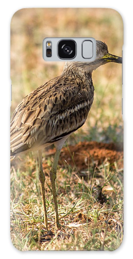 Indian Stone-curlew Galaxy S8 Case featuring the photograph Indian Stone-curlew Or Indian Thick-knee by Vijay Sonar