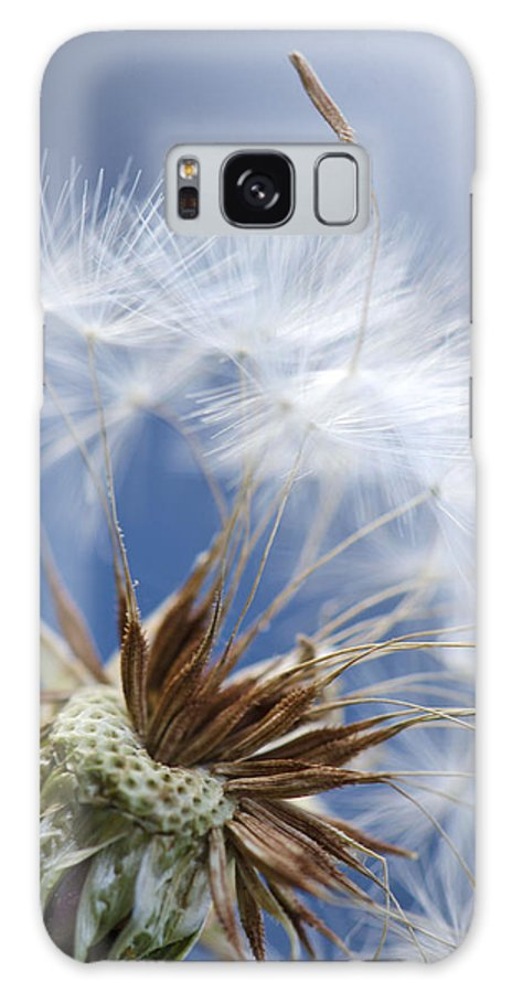 Dandelion Galaxy S8 Case featuring the photograph Individuality by Julie Wynn