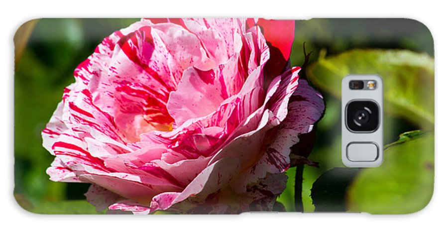 Red Rose Galaxy S8 Case featuring the photograph Innocent Love by Tikvah's Hope