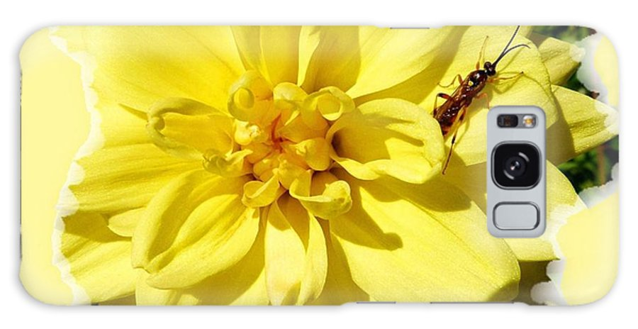 Insect On A Dahlia Galaxy S8 Case featuring the photograph Insect On A Dahlia by Will Borden