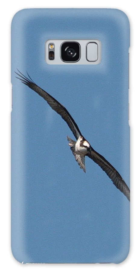 Birds Galaxy S8 Case featuring the photograph Interceptor by Ark Allen