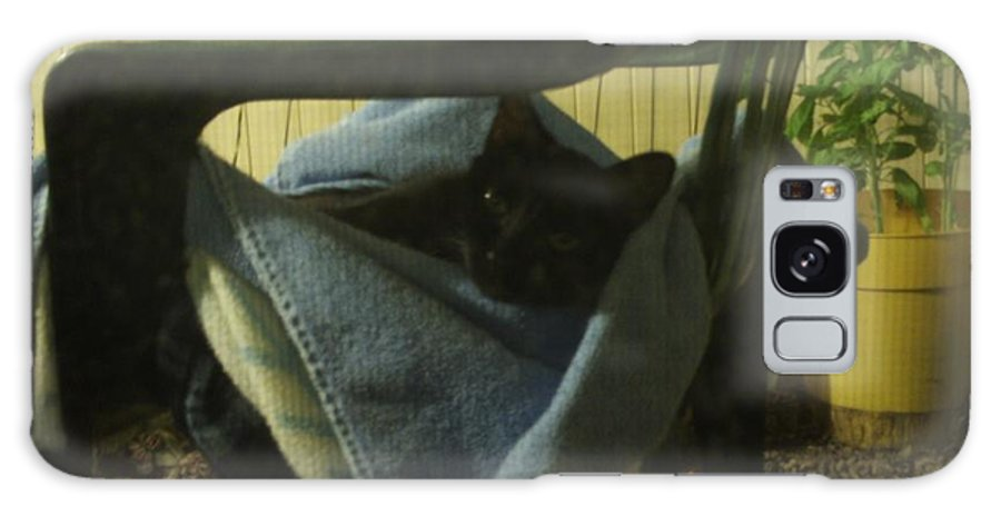 Cat On A Chair Galaxy S8 Case featuring the photograph Irina Lounging On A Chair by Julia Hanna