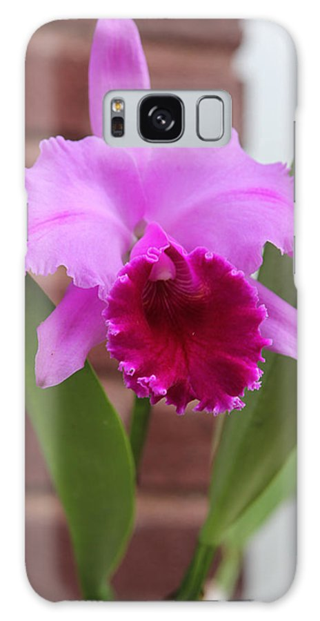 Purple Galaxy S8 Case featuring the photograph Iris Flower by Baruch Y Lebovits