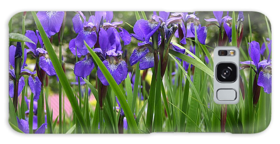 Irises Galaxy S8 Case featuring the photograph Irises In Spring by Wendy Raatz Photography