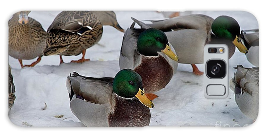 Ducks Galaxy S8 Case featuring the photograph Isabella's Ducks by Joseph Yarbrough