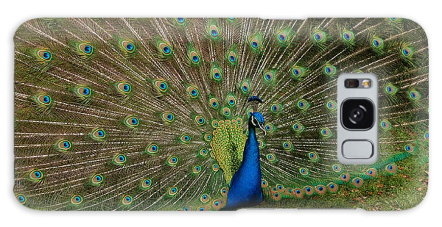 Peacock Galaxy S8 Case featuring the photograph Its All About Him by Suzanne Gaff