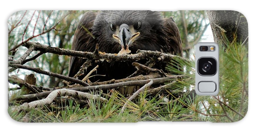 Eagle Galaxy S8 Case featuring the photograph It's Mine by Bonfire Photography