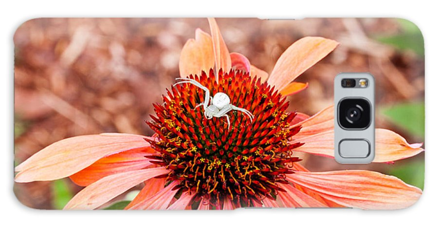 Flower Galaxy S8 Case featuring the photograph Itsy Bitsy Spider Walking On The Flower by Hasnain Shabbir