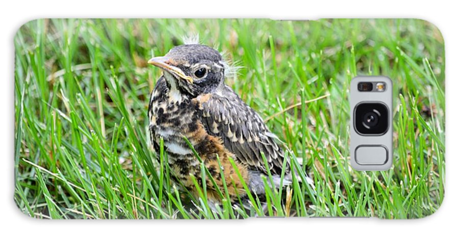 Robin Galaxy S8 Case featuring the photograph I've Fallen And Can't Get Up by Bonfire Photography