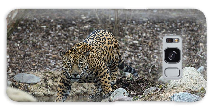 Jaguar Galaxy S8 Case featuring the photograph Jaguar 4 by Phil Abrams