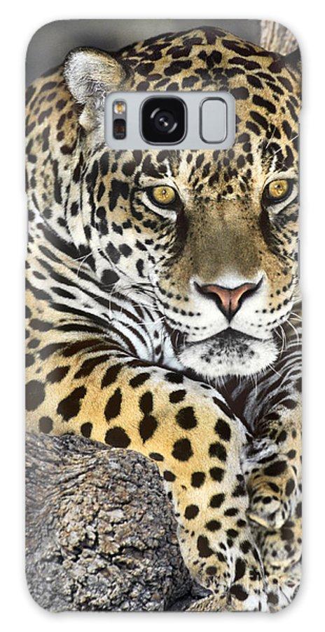 Jaguar Galaxy S8 Case featuring the photograph Jaguar Portrait Wildlife Rescue by Dave Welling
