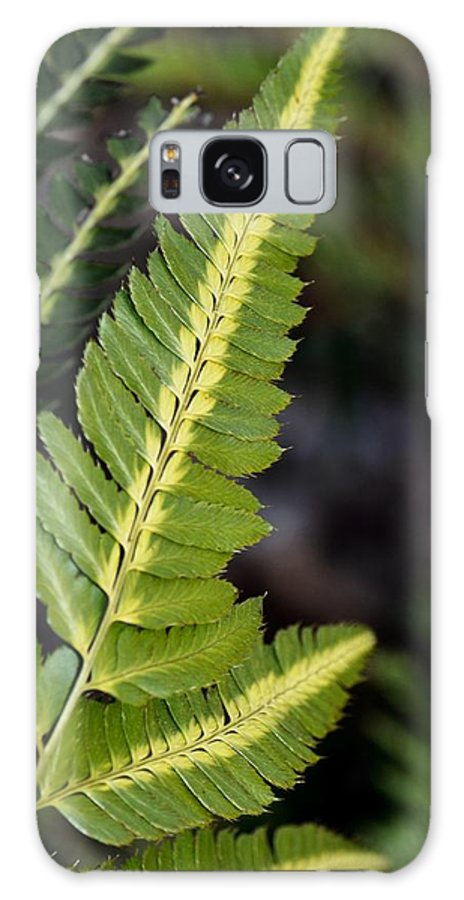Japanese Painted Fern Galaxy S8 Case featuring the photograph Japanese Painted Fern by Maria Urso