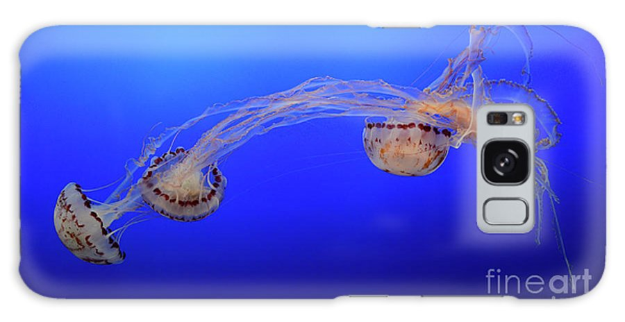 Jellyfish Galaxy S8 Case featuring the photograph Jellyfish 7 by Bob Christopher