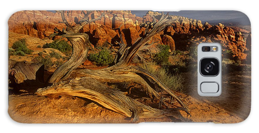 North America Galaxy S8 Case featuring the photograph Juniper Below The Fiery Furnace Arches National Park by Dave Welling