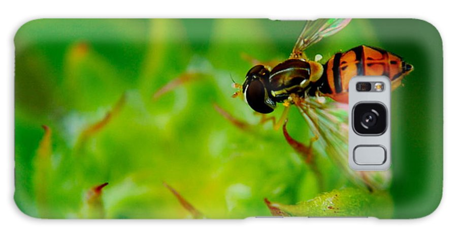 Bee Galaxy S8 Case featuring the photograph Just Beecause by Frozen in Time Fine Art Photography