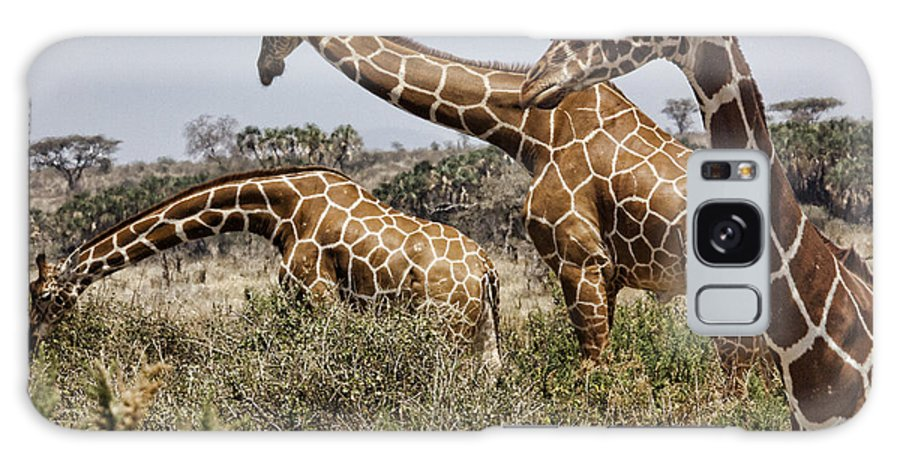Giraffes Group Gathering Three Wild Kenya Africa Galaxy S8 Case featuring the photograph Just Giraffes by Wendy White