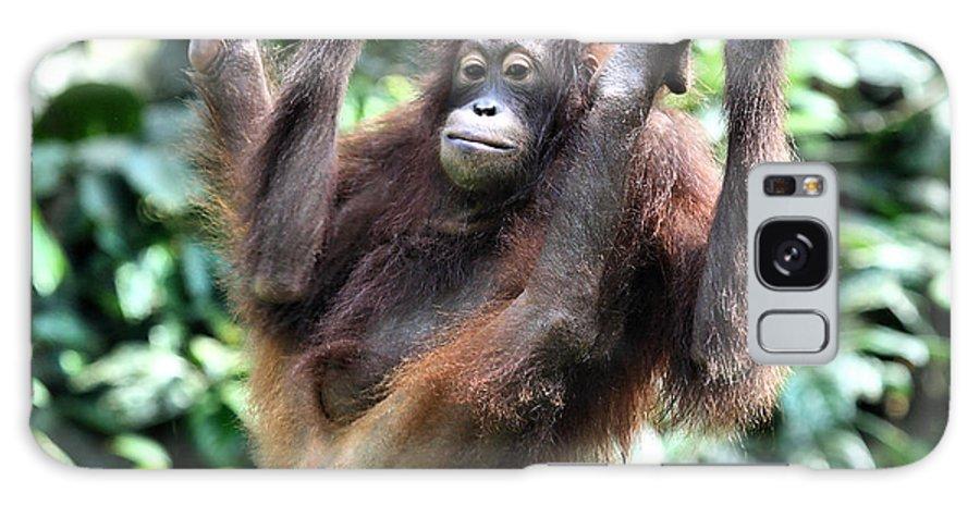 Orangutan Galaxy S8 Case featuring the photograph Juvenile Orangutan Borneo by Carole-Anne Fooks