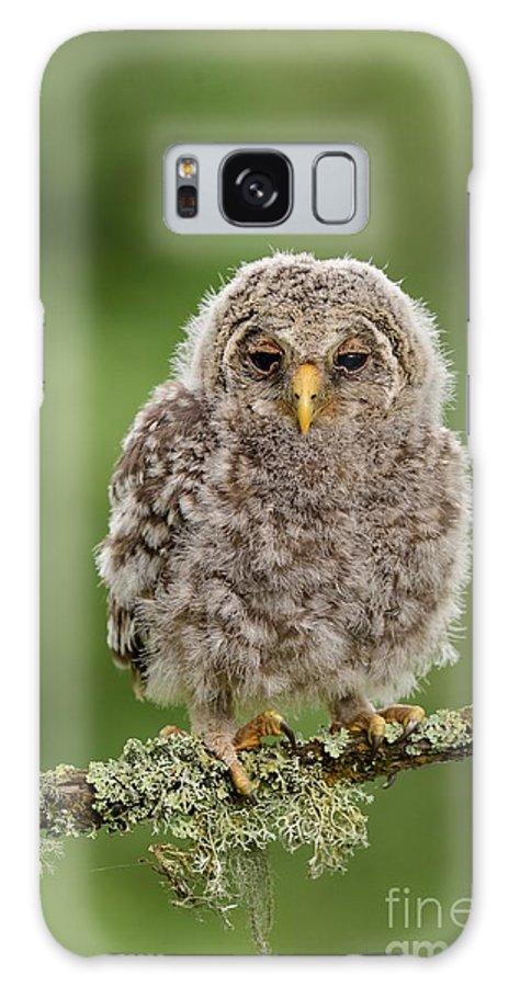 Estonia Galaxy S8 Case featuring the photograph Juvenile Ural Owl by Erik Mandre