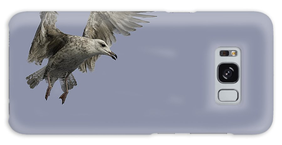 Flying Galaxy S8 Case featuring the photograph Juvenille Herring Gull by Andy Astbury