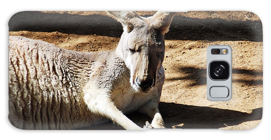 Kangaroo Galaxy S8 Case featuring the photograph Kangaroo by Aimee L Maher ALM GALLERY