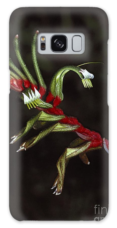 Westerm Galaxy S8 Case featuring the photograph kangaroo paw Australian wildflower by Rudi Prott