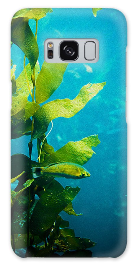 Kelp Galaxy S8 Case featuring the photograph Kelp One by SFPhotoStore