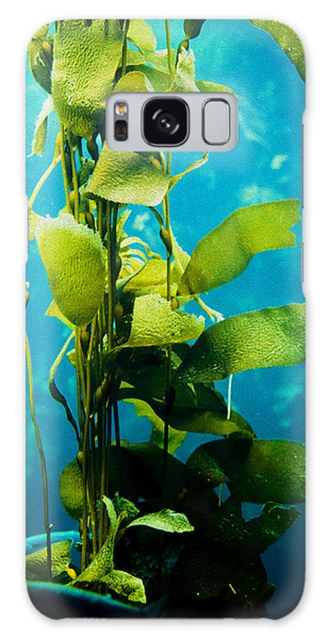 Kelp Galaxy S8 Case featuring the photograph Kelp Two by SFPhotoStore
