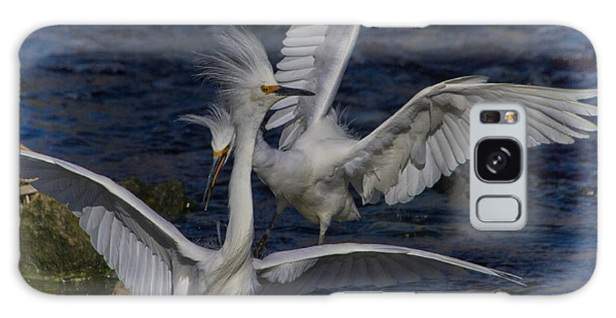 Snowy Egret Galaxy S8 Case featuring the photograph Kerfuffle by Barbara Bowen