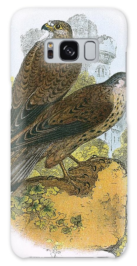 British Birds Galaxy S8 Case featuring the photograph Kestrel by English School