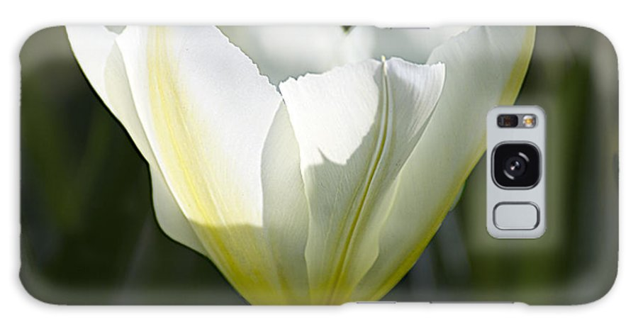 Tulips Galaxy S8 Case featuring the photograph Keukenhof 0035 by Robert Van Es