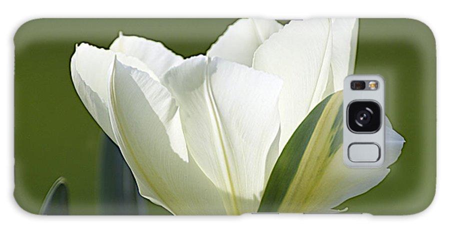 Tulips Galaxy S8 Case featuring the photograph Keukenhof0031 by Robert Van Es