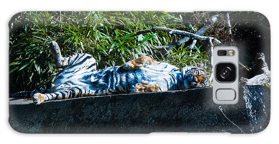 Tiger Galaxy S8 Case featuring the photograph Kickin Back In The Sun by Rich Priest