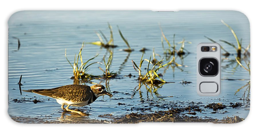 Kildeer Galaxy S8 Case featuring the photograph Kildeer Hunting For Worms by Belinda Greb