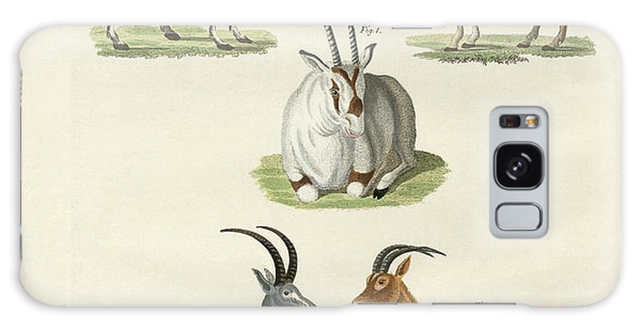 Bertuch Galaxy S8 Case featuring the drawing Kinds Of Antilopes by Splendid Art Prints