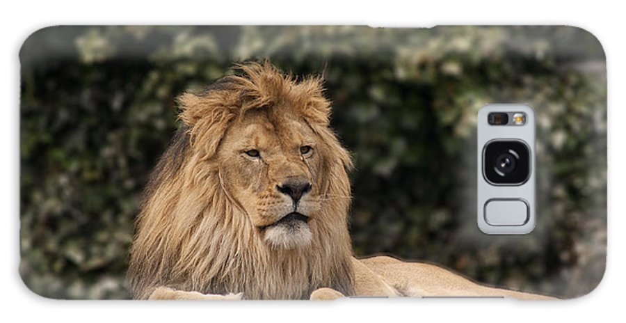 King Galaxy S8 Case featuring the photograph King Of The Jungle by Cindy Haggerty
