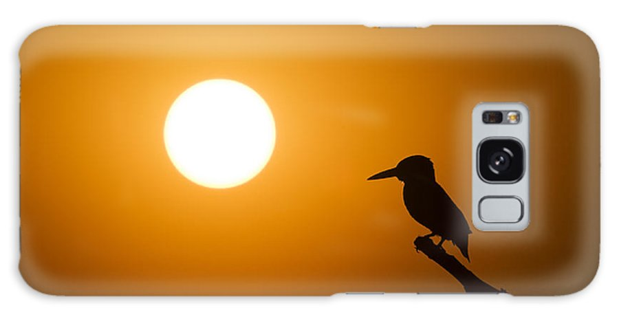 Kingfisher Galaxy S8 Case featuring the photograph Kingfisher Sunset by Tim Gainey