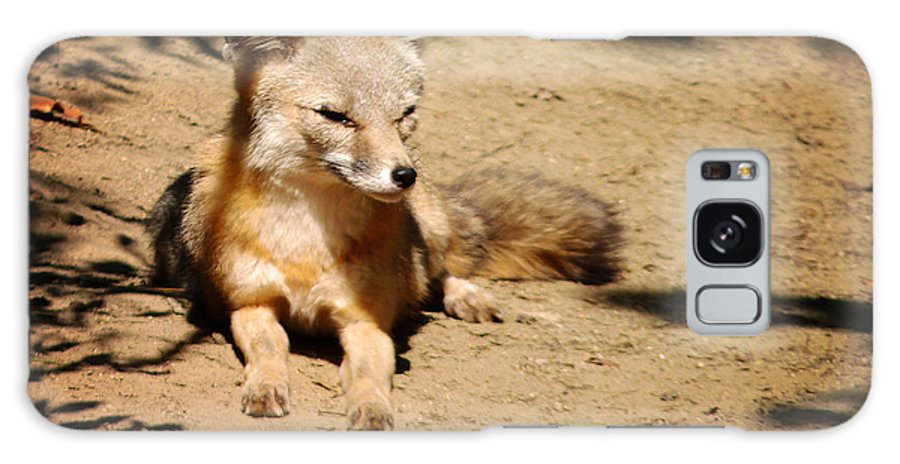 Kit Fox Galaxy S8 Case featuring the photograph Kit Fox On Campus by Meghan at FireBonnet Art