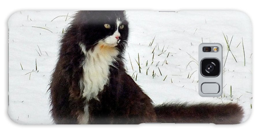 Duane Mccullough Galaxy S8 Case featuring the photograph Kitty Cat In The Snow by Duane McCullough