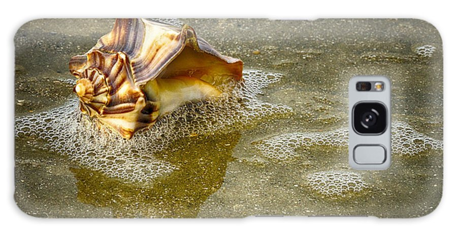 Shells Galaxy S8 Case featuring the photograph Knobbed Whelk 10 Botany Bay by Carrie Cranwill