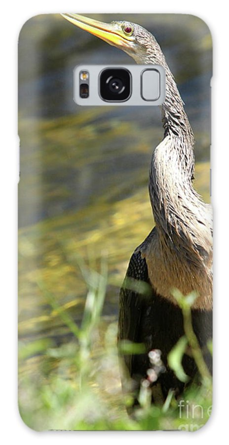 Anhinga Galaxy S8 Case featuring the photograph Knotted Neck by Christiane Schulze Art And Photography