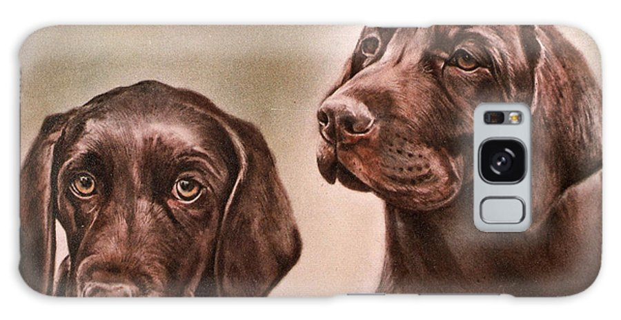 Labrador Galaxy S8 Case featuring the drawing Labrador Retrievers by Gail Dolphin