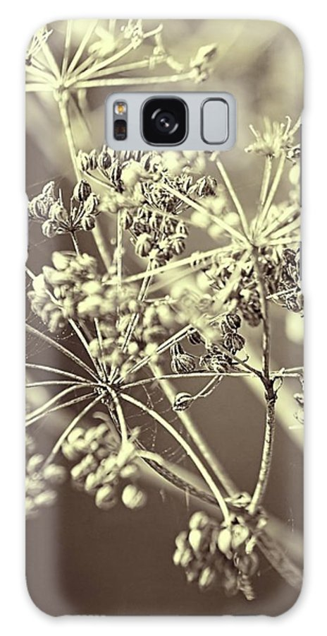Queen Anne's Lace Galaxy S8 Case featuring the photograph Lace 2 by Jenny Hudson