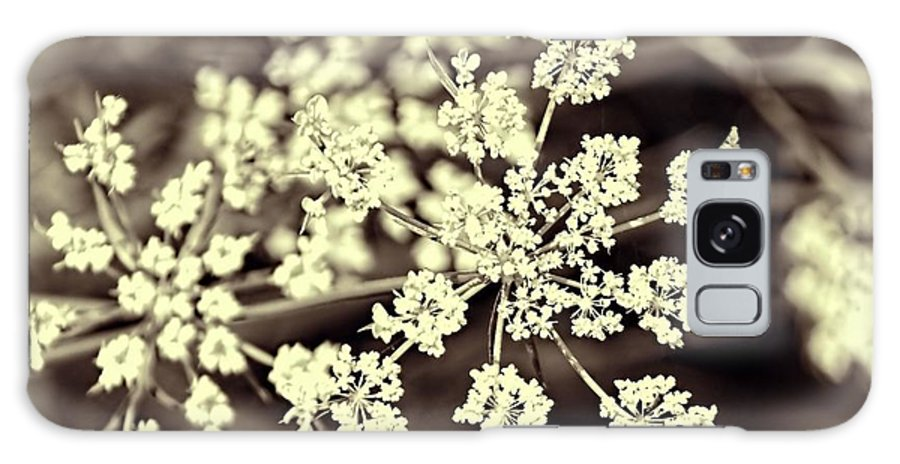 Queen Anne's Lace Galaxy S8 Case featuring the photograph Lace 3 by Jenny Hudson