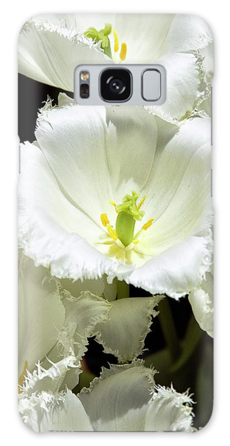 White Flower Galaxy S8 Case featuring the photograph Lace Palm Springs by William Dey